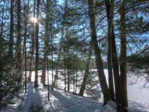 Near1319 Watersmeet Lake Rd, Eagle River, WI 54521