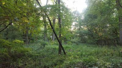Photo of Lot 135 Forest Dr, North Liberty, IA 52317