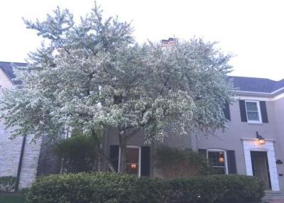 Photo of 4612 N Wilshire, Whitefish Bay, WI 53211