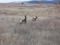Bitterroot View Ranch Lot 1a, Florence, MT 59833