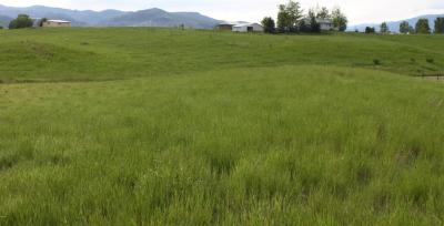 Photo of Nhn Last Chance Lane, Frenchtown, MT 59834