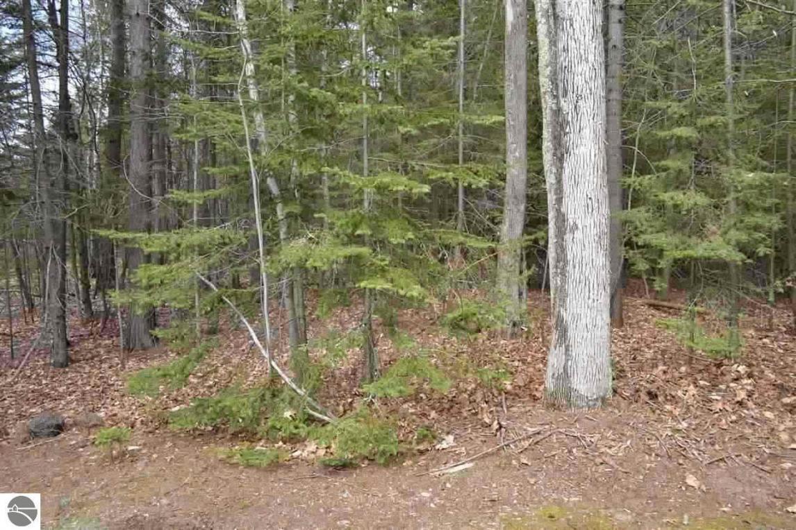 Lot 50 Cherokee Trail, Kewadin, MI 49648