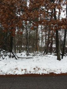 Lot 31 Blk 3 North Spruce Drive, Breezy Point, MN 56472
