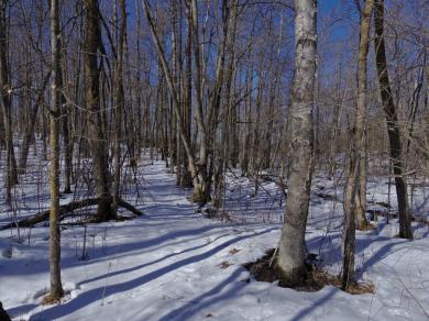 TBD Howling Wolf Lot 12, Turtle River Twp, MN 56601