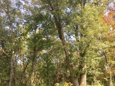 Photo of 105th Ave 40 Acres, Cadott, WI 54727