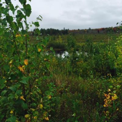 Photo of xxx Hay Creek Road, New Dosey Twp, MN 55072