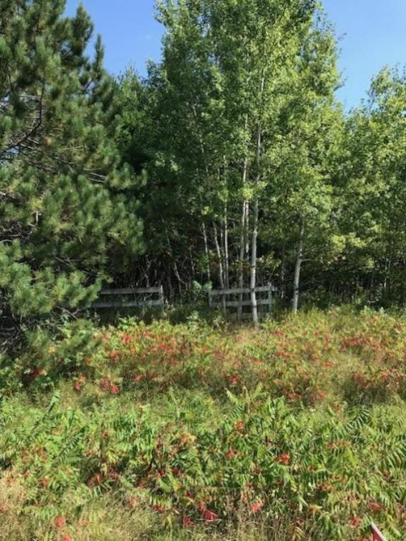 3656XX Deer Street, Nordland Twp, MN 56431