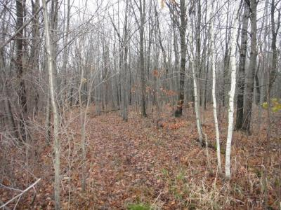 Photo of Lot 3 290th St, Edson Twp, WI 54727