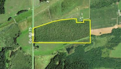 PtNW1/4 County 75, Blowers Twp, MN 56482