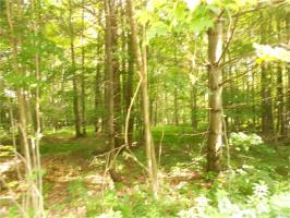 37 acres Pin Oak, Boston, NY 14025