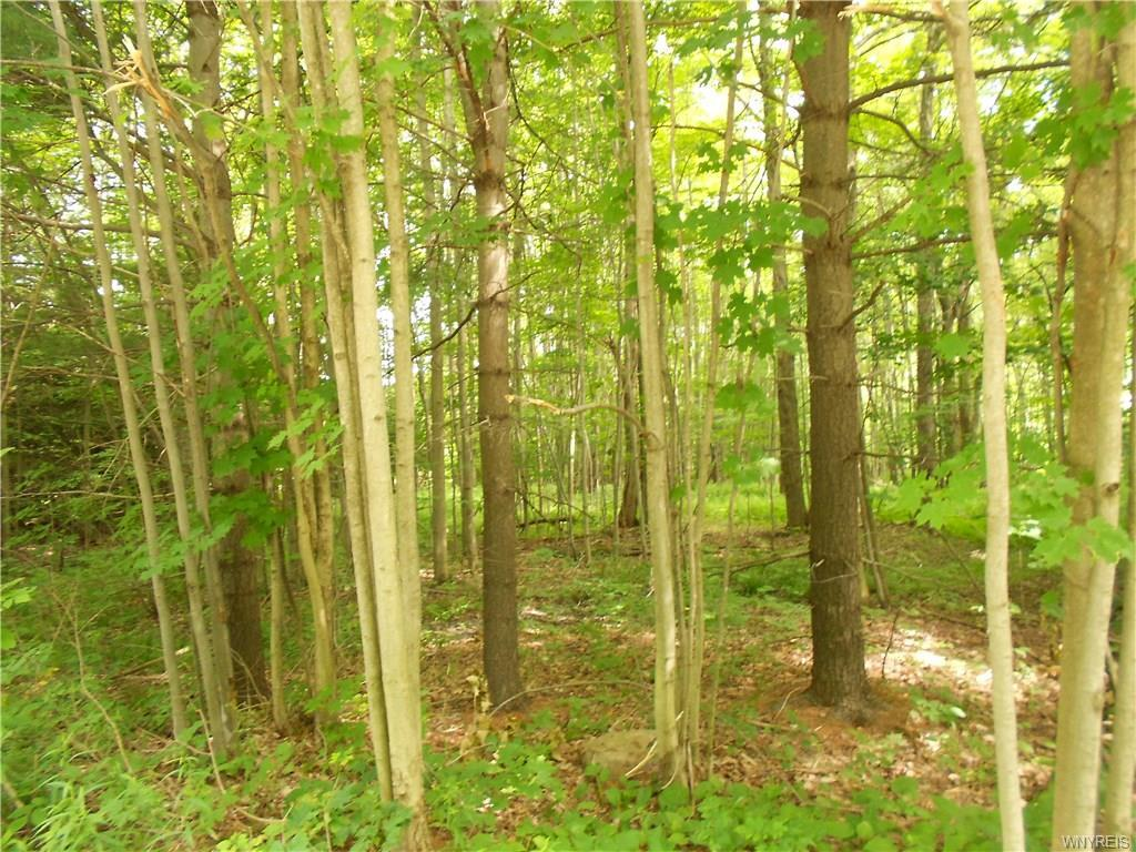 Wooded lot in Colden for $19,900 Dollars!