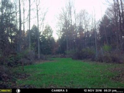 Photo of Gainesville, NY 14066
