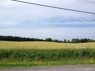 Photo of Sweetland, Stafford, NY 14143