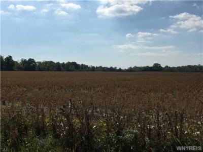 Photo of VL Shawnee - Townline, Wheatfield, NY 14120