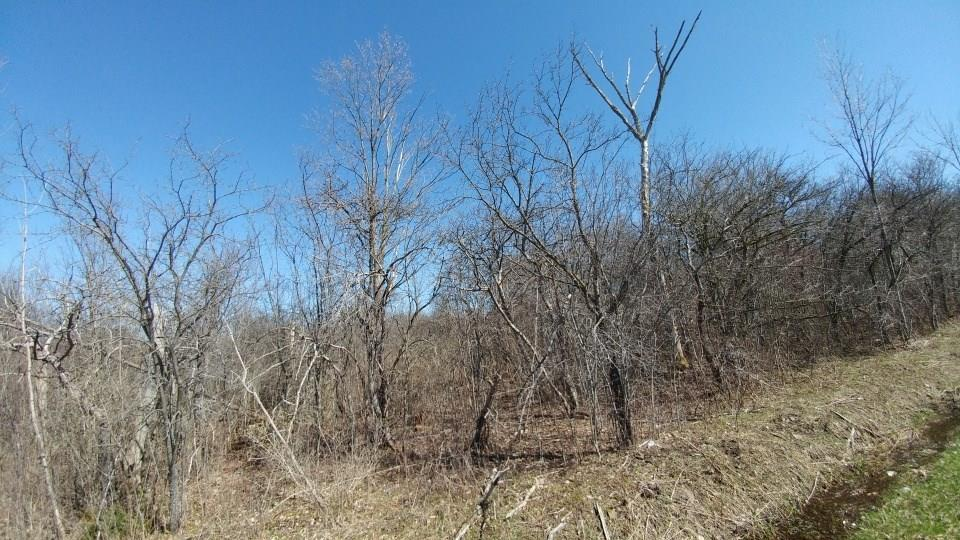 lot 1 part of 526 Bird Cemetery Road, Locke, NY 13092