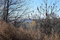 Big Tree Road, Livonia, NY 14487