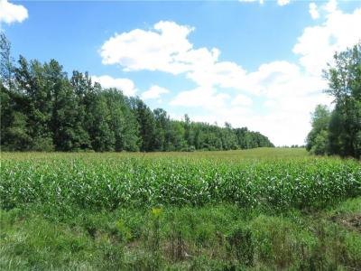 Photo of Frisbee Hill Road, Greece, NY 14468