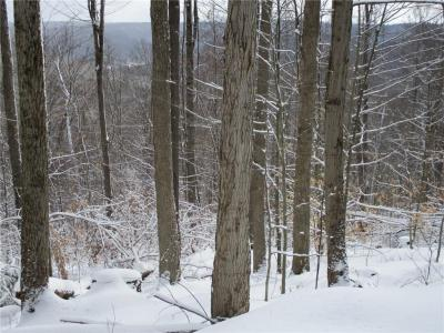 Photo of Geiger Hollow Road, Allegany, NY 14706