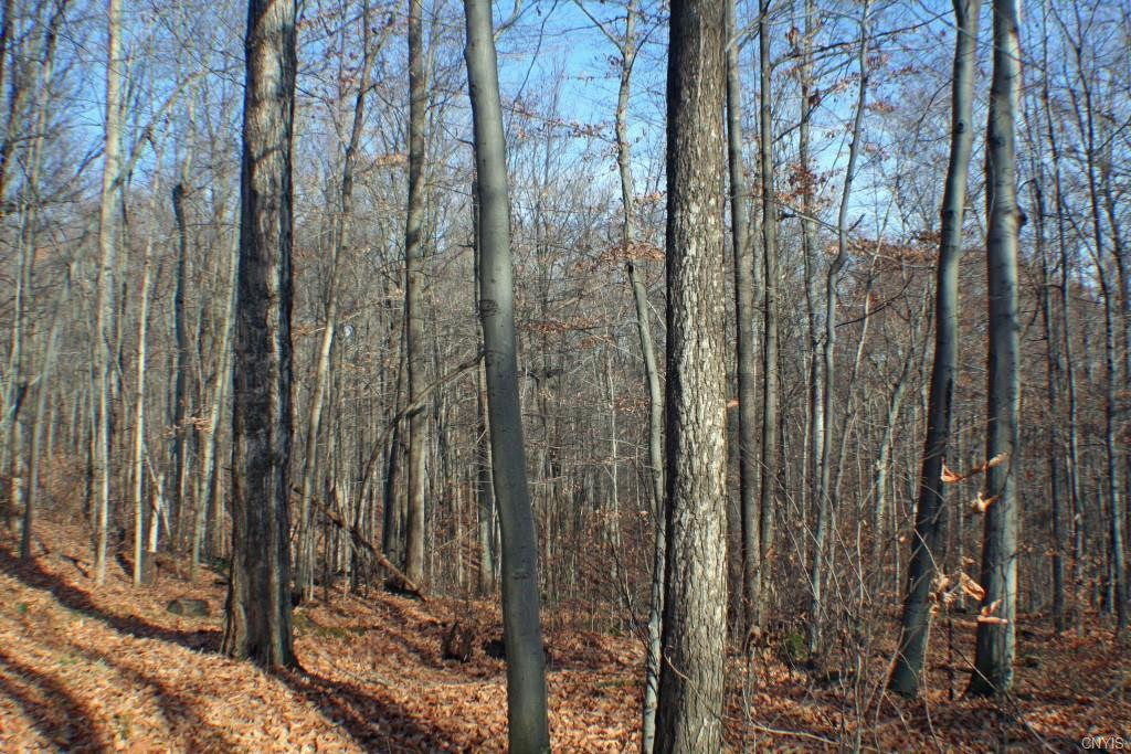 00 Liberty Pole Road, Springwater, NY 14560