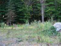 156 Leatherstocking Ln, Pocono Pines, PA 18350