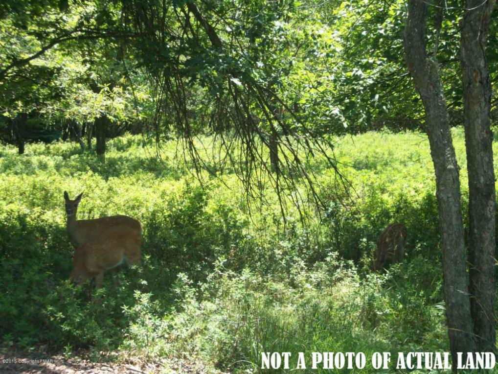 Lot 44 Sec Forest Hill Drive, Blakeslee, PA 18610