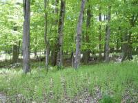227 Oak Terrace, Pocono Lake, PA 18347