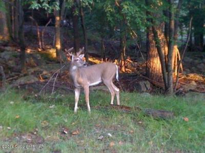 Photo of G17 Wolf Hollow Rd, Lake Harmony, PA 18624