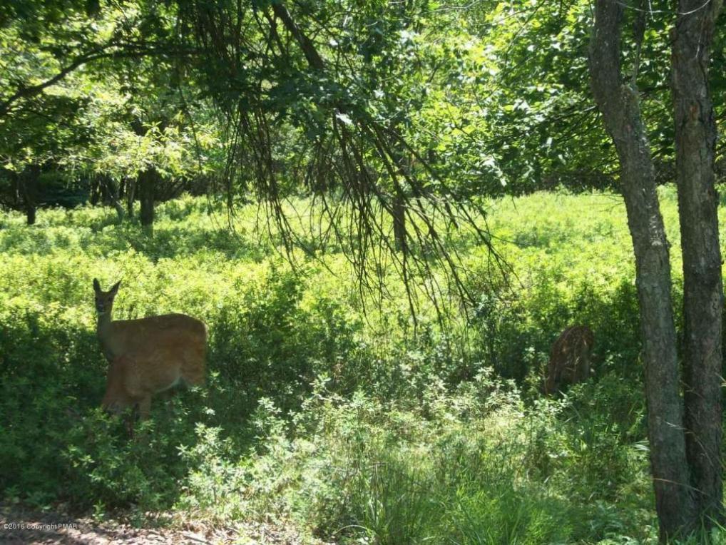 lot 1728 Yellow Run Rd, Jim Thorpe, PA 18229