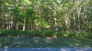 218 Shenandoah Trl-lot 159, Effort, PA 18330
