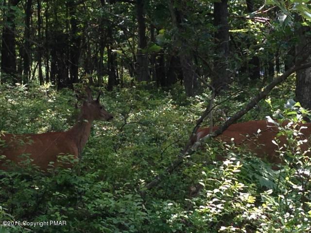 Laurel Woods Cir, Albrightsville, PA 18210