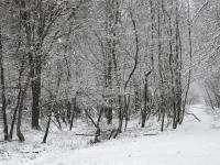 1102 Snowshoe Ln, Albrightsville, PA 18210