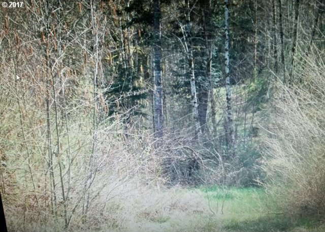 Timber Rd, Vernonia, OR 97064