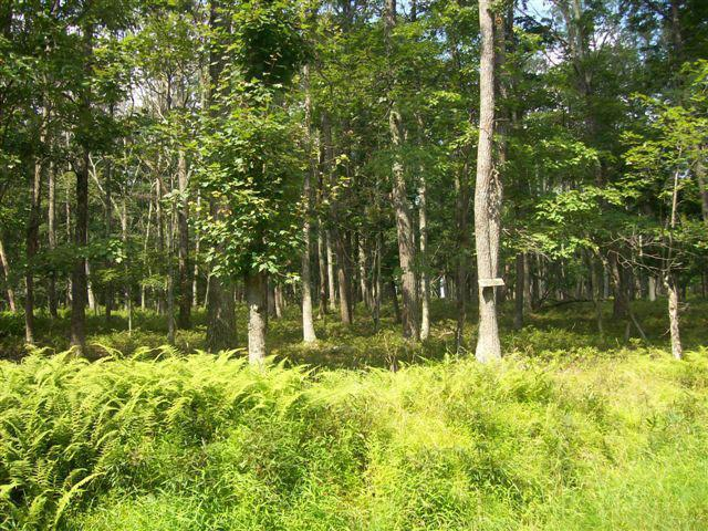 LOT 99 Lower Lakeview Dr, Hawley, PA 18428