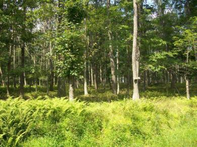 LOT 13-15 Old Milford Rd, Milford, PA 18337