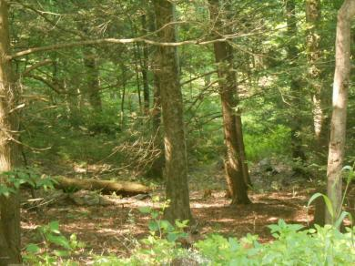52 Logger Rd, Canadensis, PA 18325