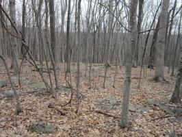 Lot 135 Lower Independence Dr, Lackawaxen, PA 18435