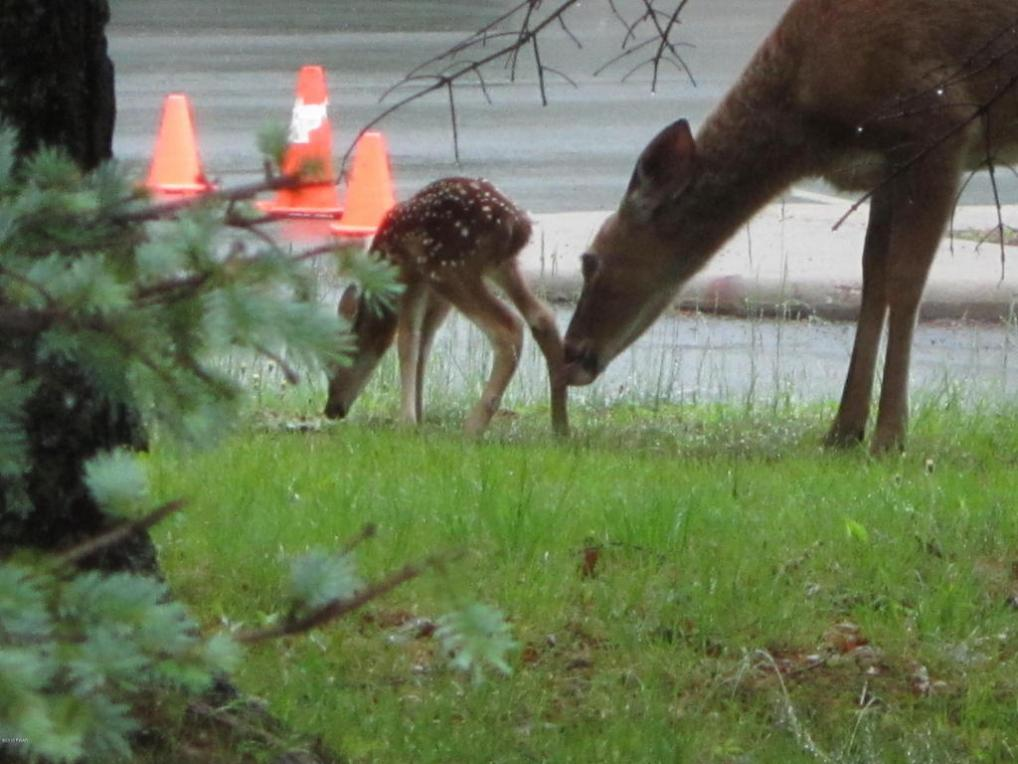 Lot 131 Paul Revere Rd, Lackawaxen, PA 18435