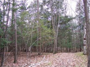 River Forest Hills, Pulaski, WI 54162