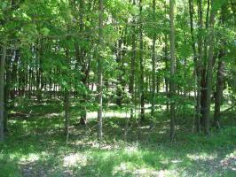 N4898 Stony Hill, Marion, WI 54950