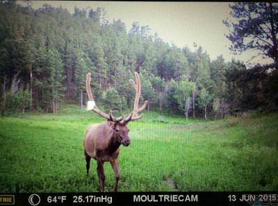 Photo of Tbd Beaver Creek Rd, Pringle, SD 57773