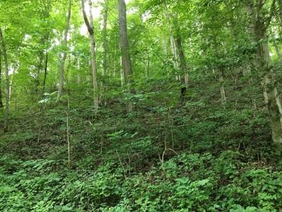Photo of 90.41 Ac Narrows Road, Laurelville, OH 43135