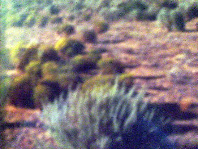 Finley (u22b82l32), Rio Rancho, NM 87124