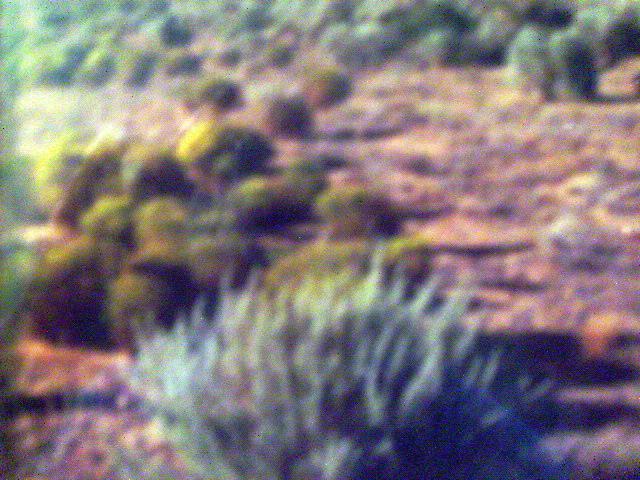 Farol (u12b19l11), Rio Rancho, NM 87124