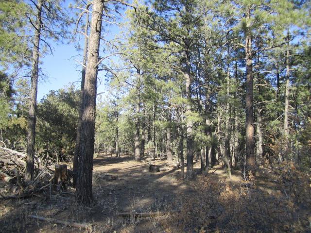 21 Estrella Vista Drive, Tijeras, NM 87059