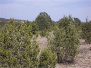 Photo of Shiraz Ranch, Tajique, NM 87016