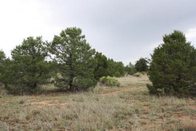 Lot 206 Pine Meadows Unit 3, Ramah, NM 87321