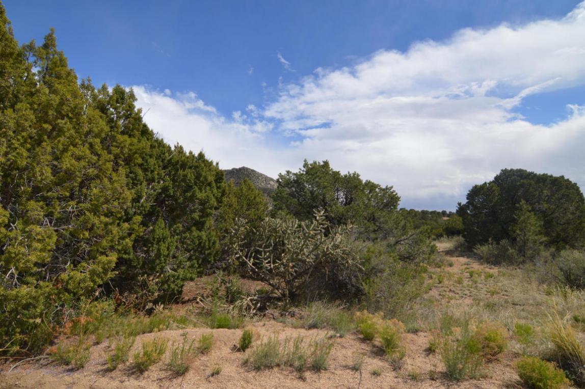 Circle Drive NE, Albuquerque, NM 87122