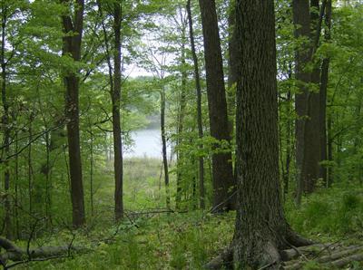 11 E Long Lake Drive, Cassopolis, MI 49031