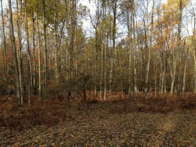 Photo of 80 acres N 112th Avenue, Hart, MI 49420