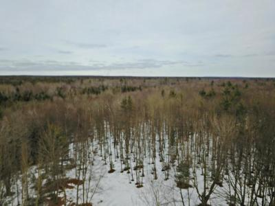 Photo of Morton Road, Free Soil, MI 49411